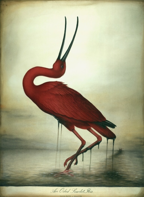 oiled-scarlet-ibis-prints